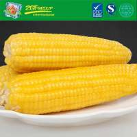 Vacuum package sweet corn cut