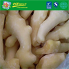 High Grade Frozen IQF Whole Peeled Gingers