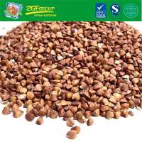 HOT SALE Chinese Roasted Buckwheat