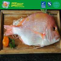 Frozen Luminous Bream