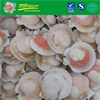 Hot Sale Frozen Half Shell Sea Scallop