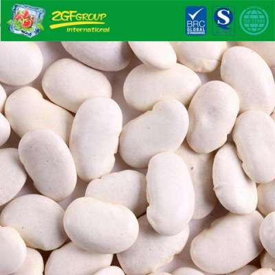 New Crop For Exporting Dry White Kidney Bean